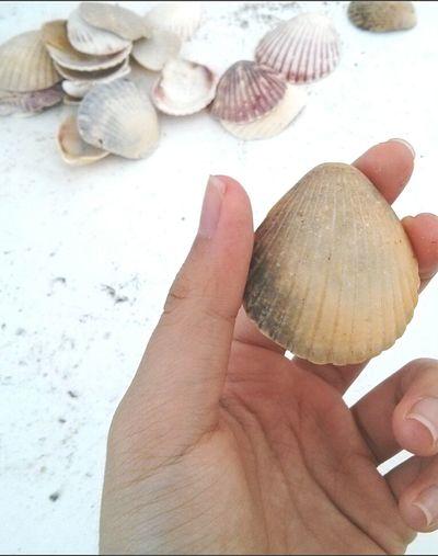 Beachlife Beach Shells Beautiful Nature Beautiful ♥ Enjoying Life Relaxing Riu Hotel That's Me Myhand