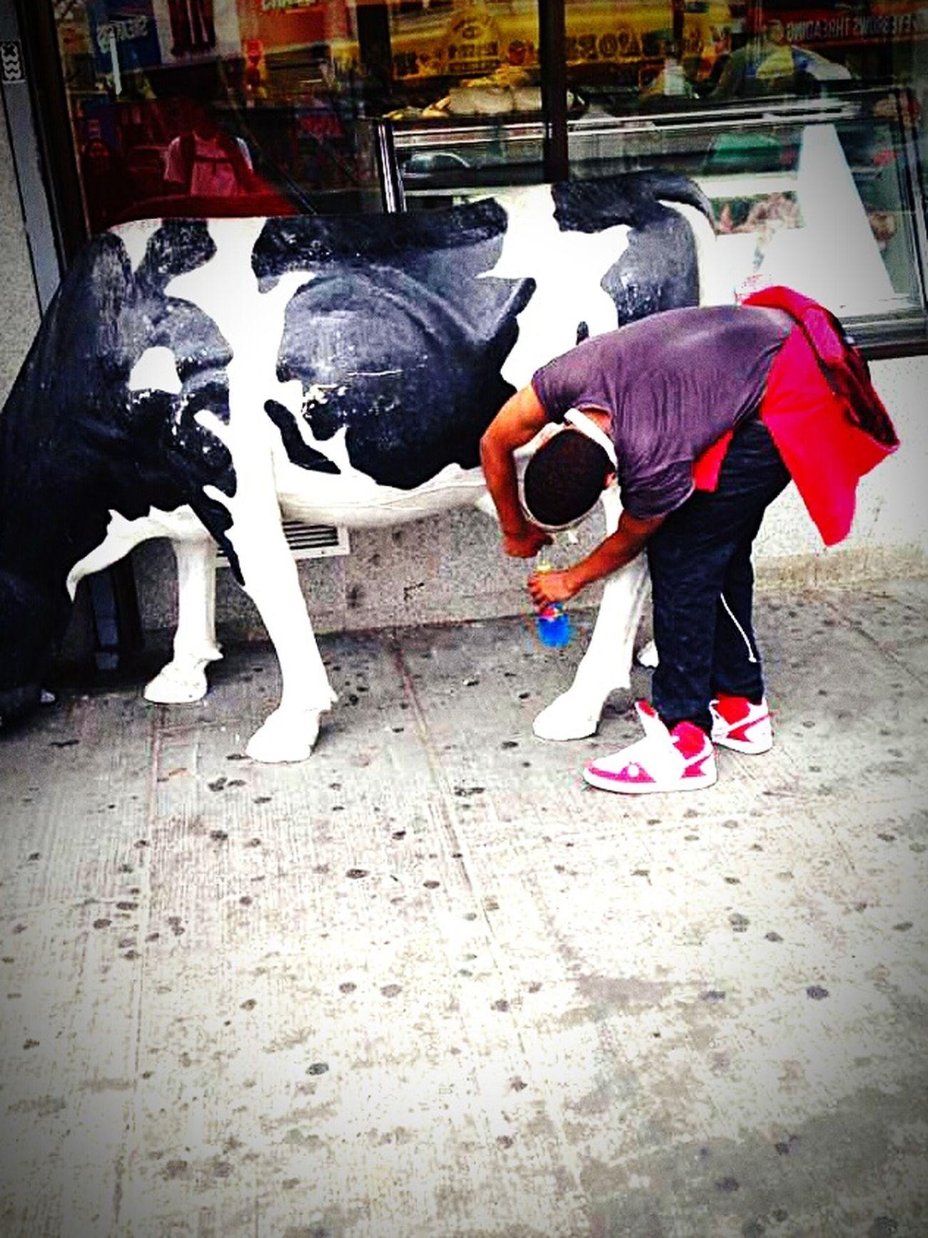 Wyd? Moo Cow BRUH💁