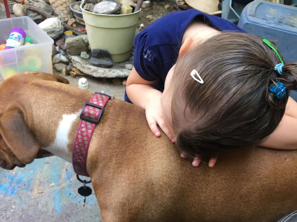 Love Person Holding Innocence Child Dog Pets Of Eyeem Pet Photography  Little Girl Love Tender Moments Love Pit Bull Pit Bull Love Stop Breed Discrimination Love Love Love Nanny