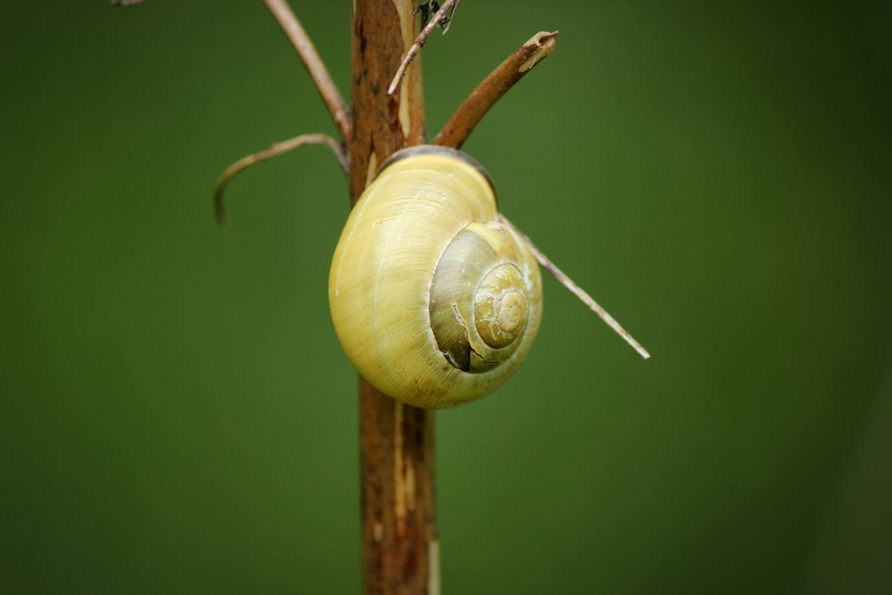 Macro Photography Macro Flowers,Plants & Garden Animals In The Wild Beauty In Nature Nature Plants Schnecken Gastropoda
