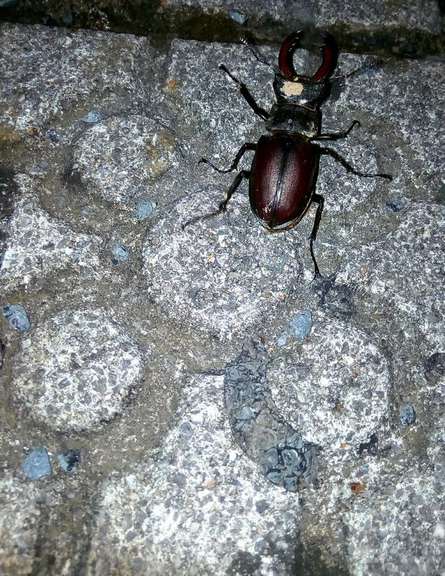 Amazing surprise way home😃 City Nature Bug Insect Photography Insects Beautiful Nature Pavement Baldosa Insecto Insectos De España Insectos En Ciudad