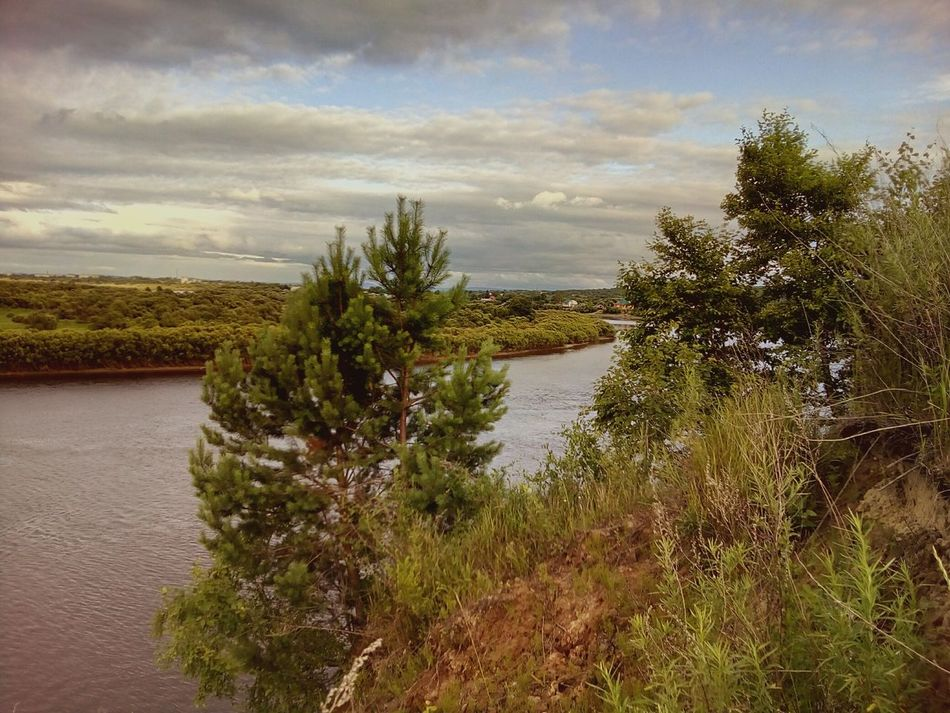 Pine on the river's cliff Pine Cliff River River Cliff River View Riverside Summer July Nature Sky Tree Sky And Clouds Clouds And Sky Evening Evening Sky Evening Light Beauty In Nature Relaxation Landscape Landscapes Riverscape Russia