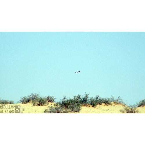 صورة طبيعه لاندسكيب الطبيعة تصويري nature landscape tree sand السعودية ksa Saudi القصيم بعدستي