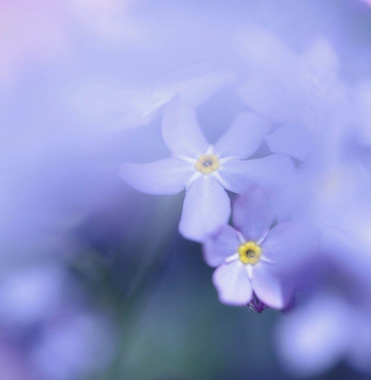 Beautiful stock photos of peace, Day, Flower, No People, Outdoors