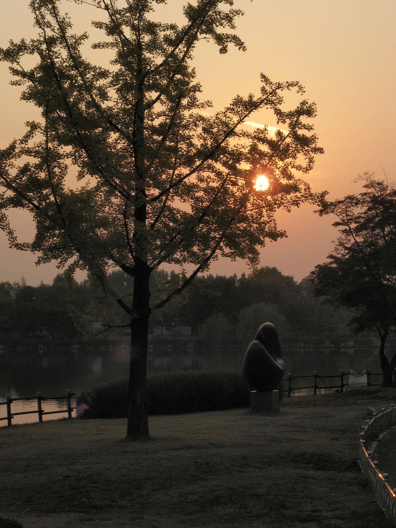 a tree and sun Tree Sun Scenics Beauty In Nature Field 365