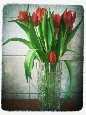 tulpen by Renate