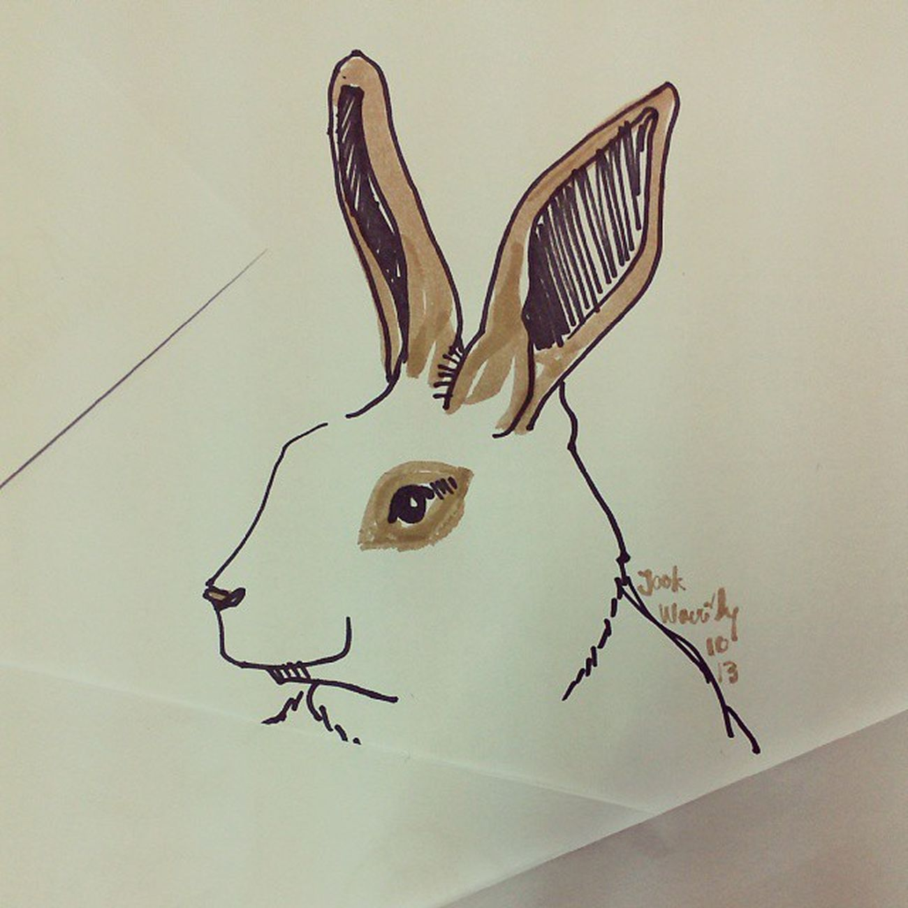 เจ้าจุก Rabbiy Bunny  Draw Illus