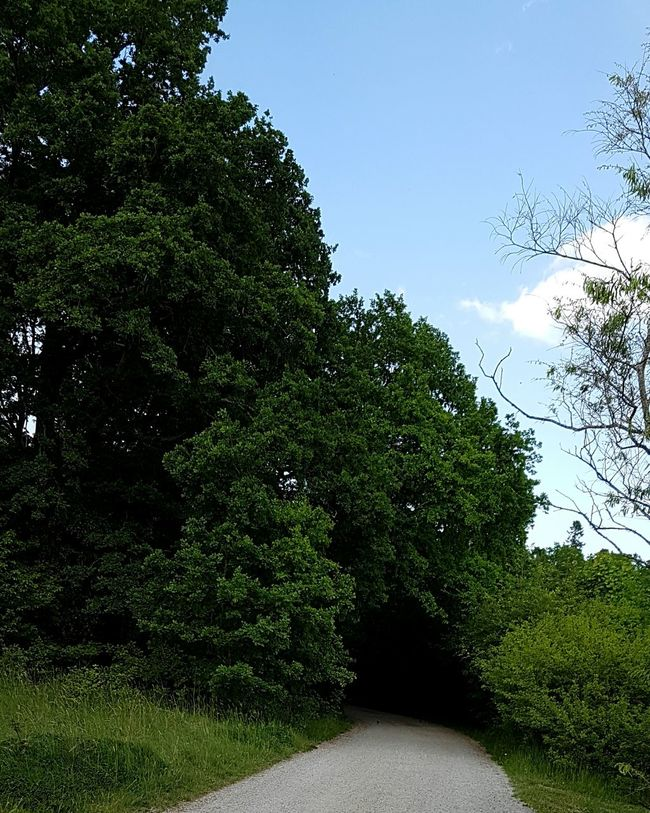 My Commute Lonly Road Dark Forrest Dark Forest Road Check This Out Eye4photography  EyeEm The Best Shots Scary Road Unkown Follow4follow Photo Of The Day Best Shots EyeEm Eyeem Clouds And Sky Eyeem Clouds EyeEmBestPics EyeEm Best Shots EyeEm Gallery Clouds And Sky Forrest Photography Trees Against The Sky Lonly.... The Great Outdoors - 2016 EyeEm Awards Outside Photography In The Woods The Following