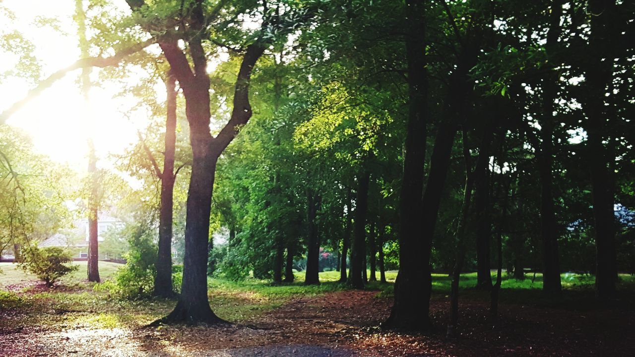tree, nature, tranquility, tree trunk, tranquil scene, beauty in nature, growth, outdoors, day, scenics, sunlight, no people, landscape, branch