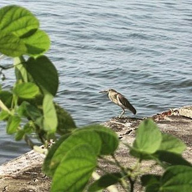 An intense Look to the vast sea... Timing Birds Sea Waterscape Nature Greens Blue Fly Canon 12MP Zoom Instaedit Insta Sharpen Trip Bikelife Photographer Beauty View Climate : Sreeni