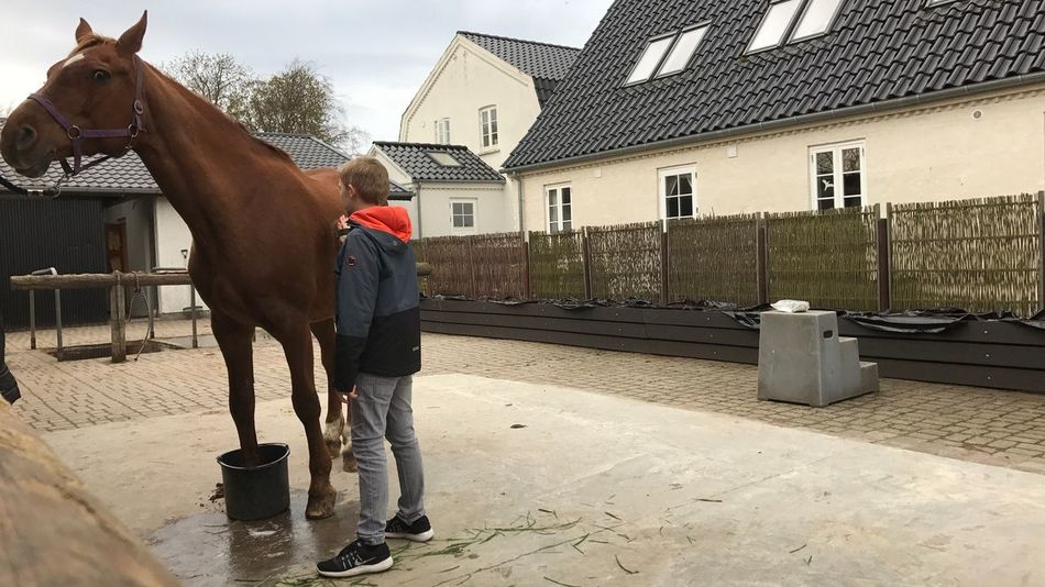 Horse and Boy One Animal Mammal Standing Outdoors One Person