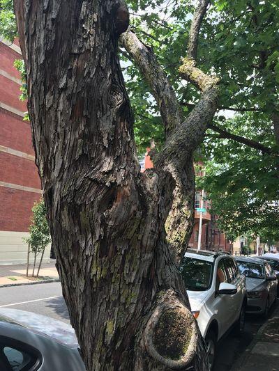 Tree City Tree