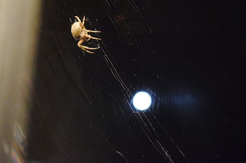 To the Moon and Back Moon Spider Web Spider Web Fascination Nature No People Eight Legs Arachnid Nature
