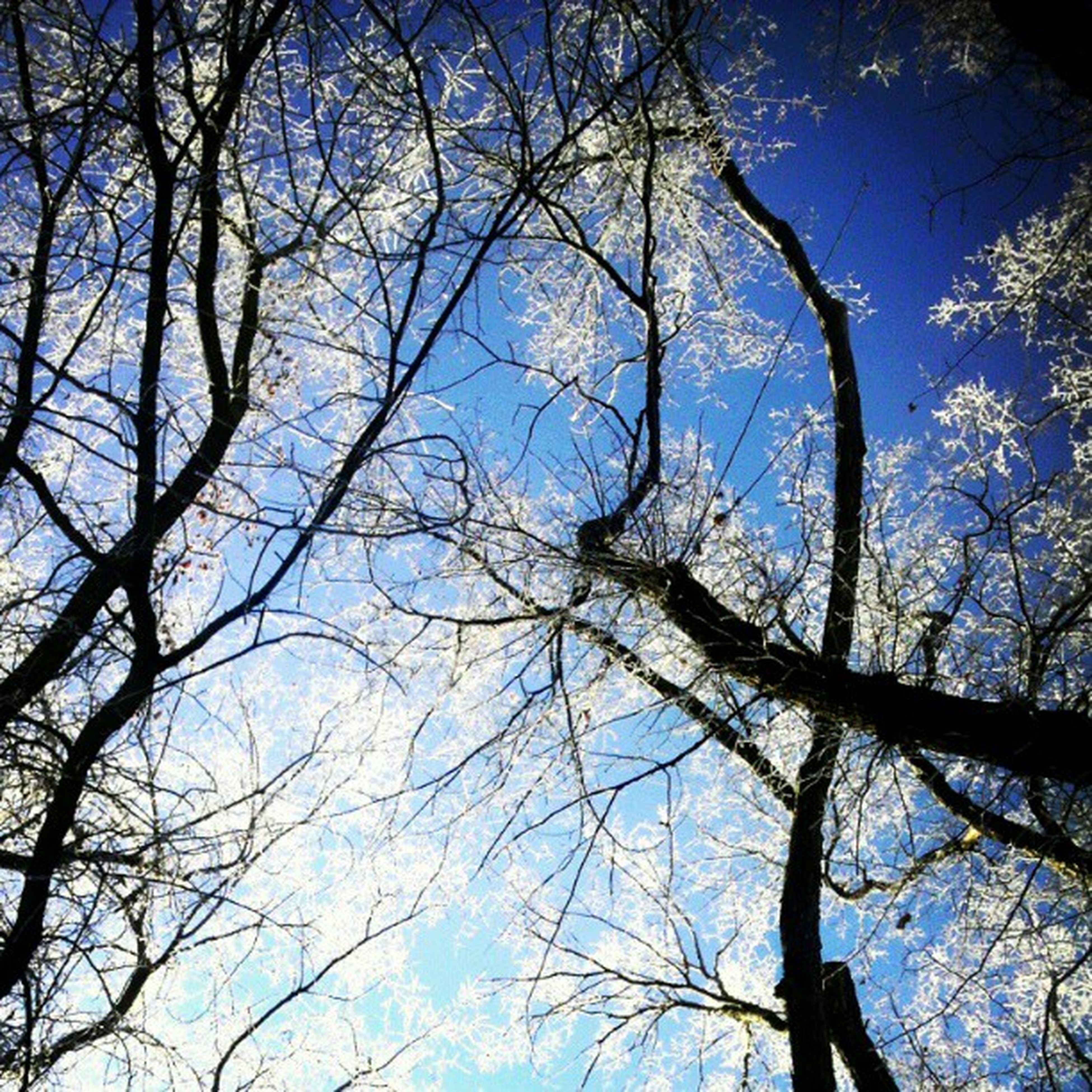 branch, tree, low angle view, bare tree, sky, nature, blue, tranquility, beauty in nature, scenics, clear sky, growth, tree trunk, silhouette, outdoors, no people, day, tranquil scene, backgrounds, high section