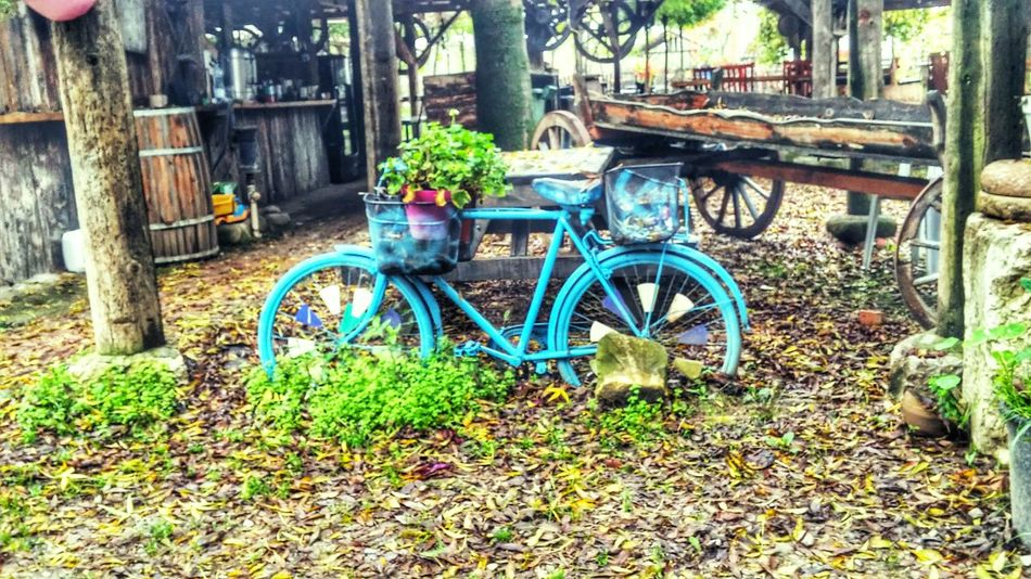 Mavi Bisiklet