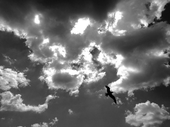 Clouds And Sky Blackandwhite