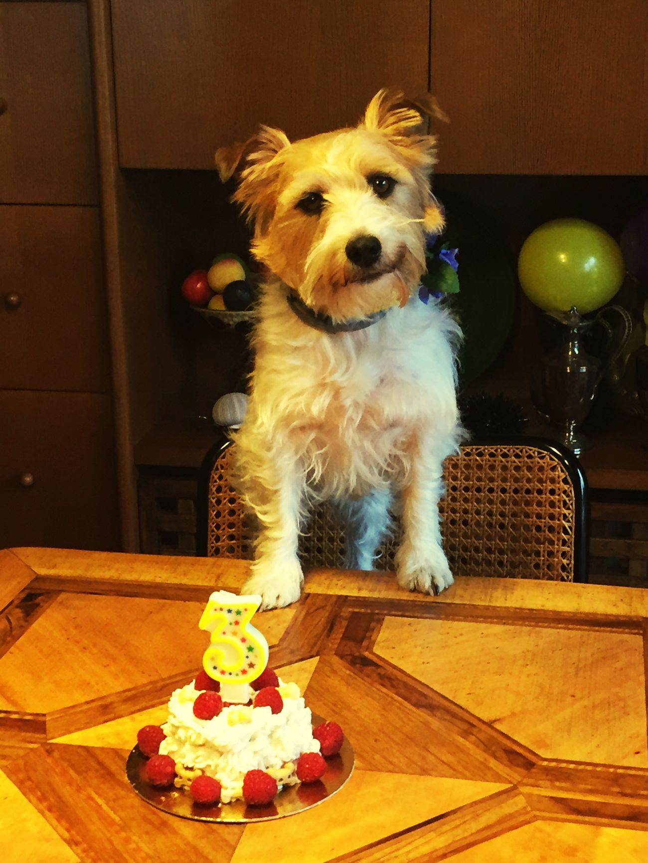 Un anno dopo.... auguri Terry!!! ❤ Pets Animal Themes Dog