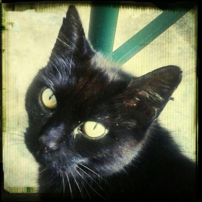 My baby Shadow Cat