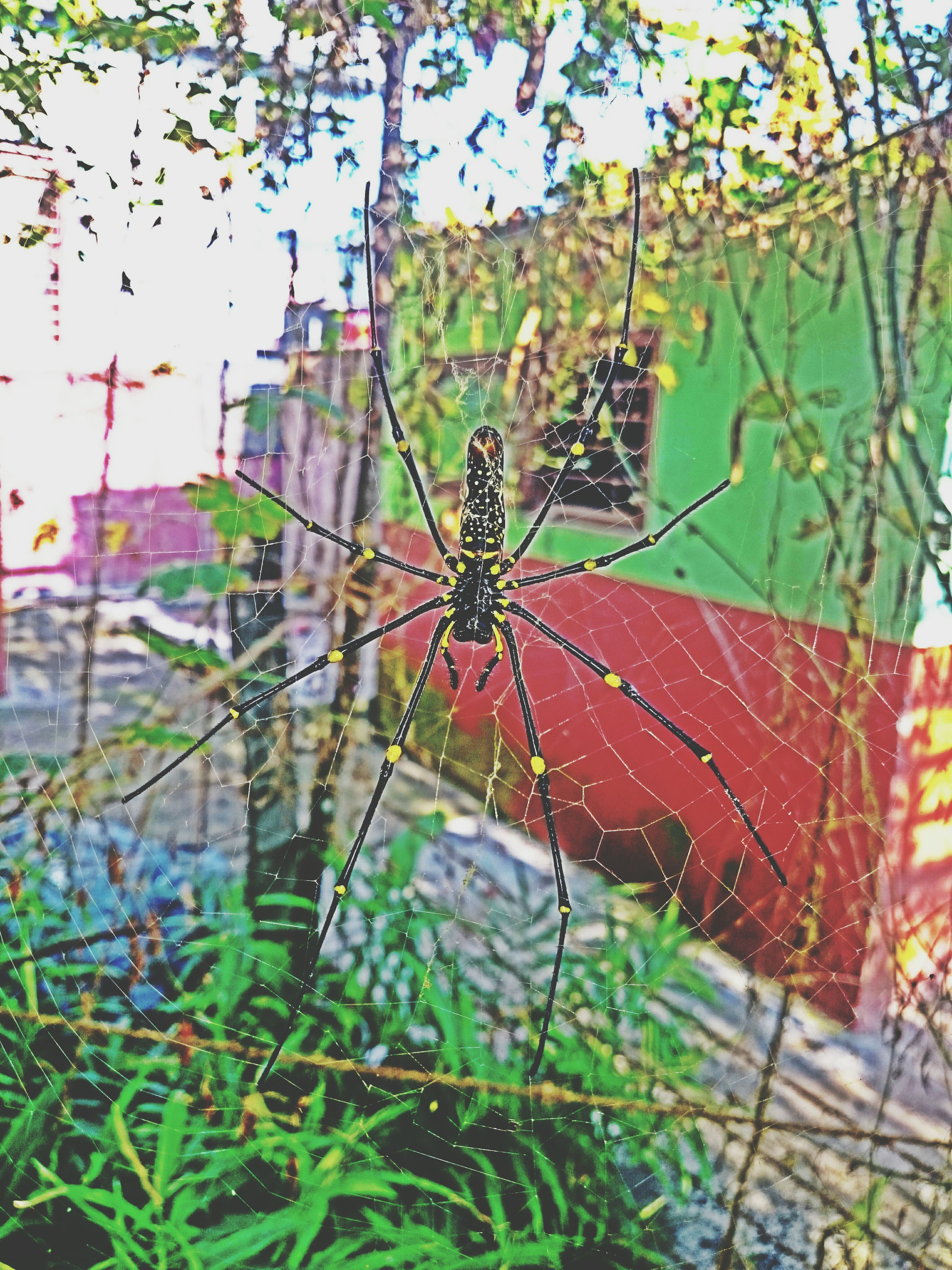 spider web, focus on foreground, close-up, day, nature, leaf, insect, outdoors, plant, no people, red, fragility, water, growth, natural pattern, one animal, beauty in nature, low angle view, wet, sky