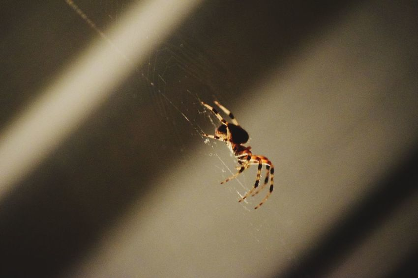 Our spider friend Spider Spider Web No People Close-up Nature Arachnid Insect Eight Legs Night Perspectives On Nature Spider Nature_collection Eyenaturelover Spiders