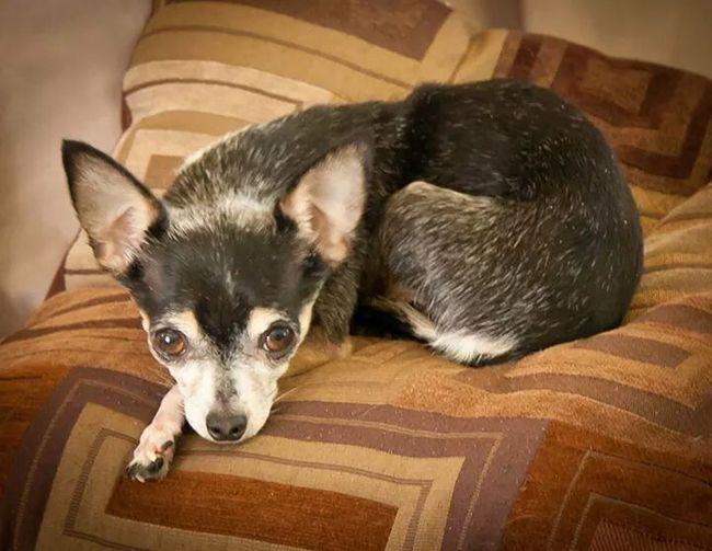 Bella ❤ Bella DaBall RaRa  My Dogs Are Cooler Than Your Kids