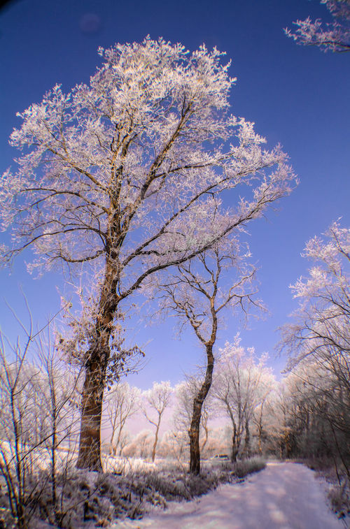 Cold Cold Temperature Frost Ice Landcape Nature Outdoors Sky Snow Tree White