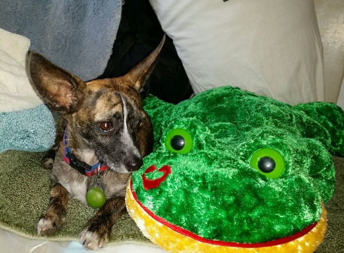 What is that ssying kiss a frog..... mr Wiggie a doggie day Enjoying Life Mr.Wiggie