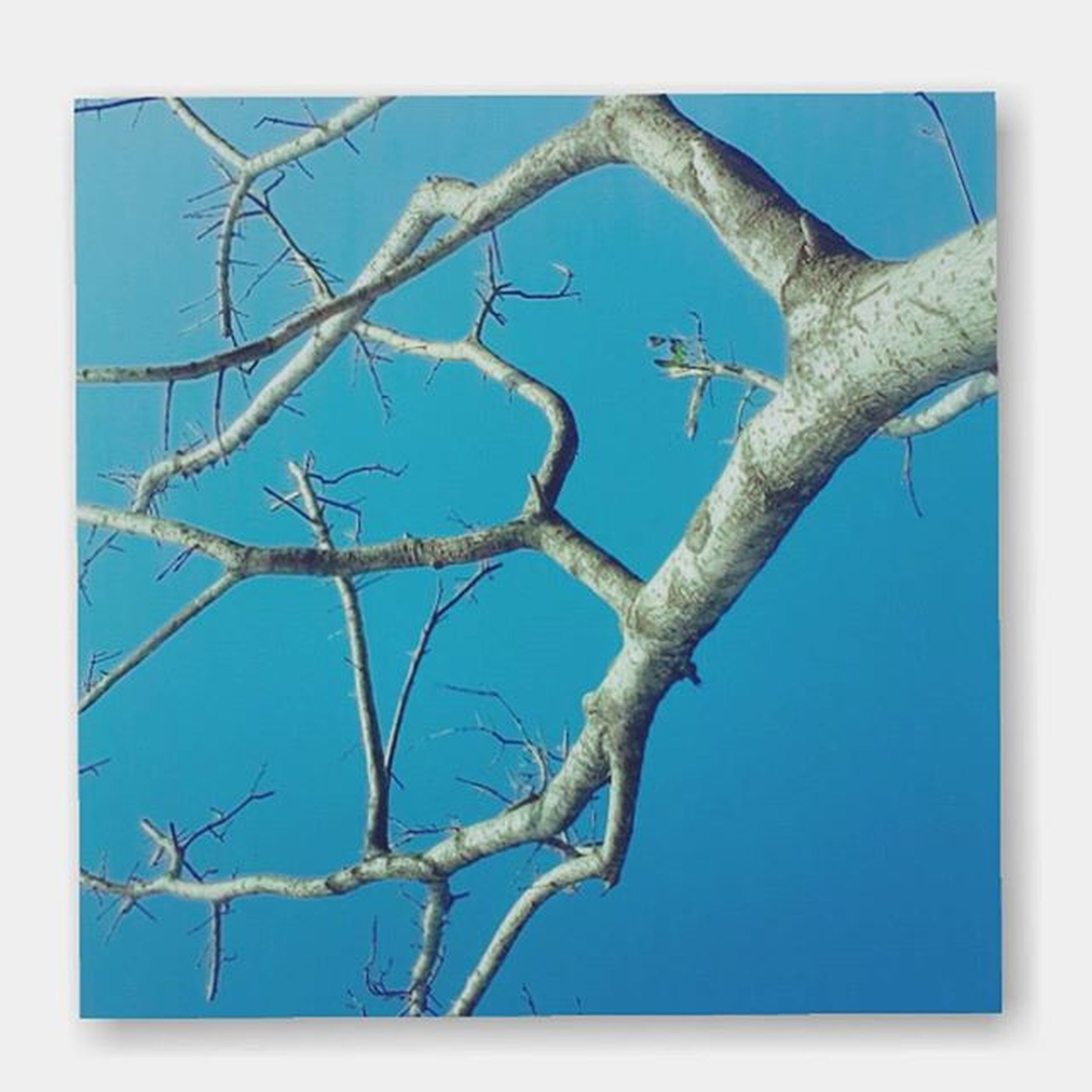 blue, low angle view, clear sky, branch, transfer print, bare tree, auto post production filter, nature, day, dead plant, outdoors, sky, close-up, power line, twig, no people, tree, dry, tranquility, focus on foreground