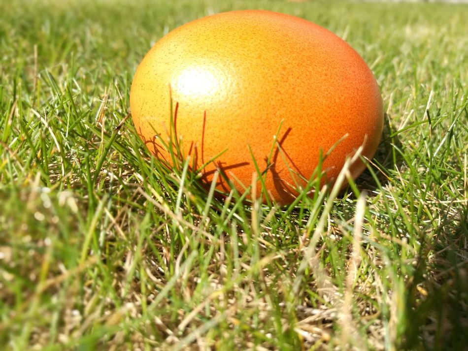 Grass Easter Nature Freshness Growth Golden Egg Egg Close-up