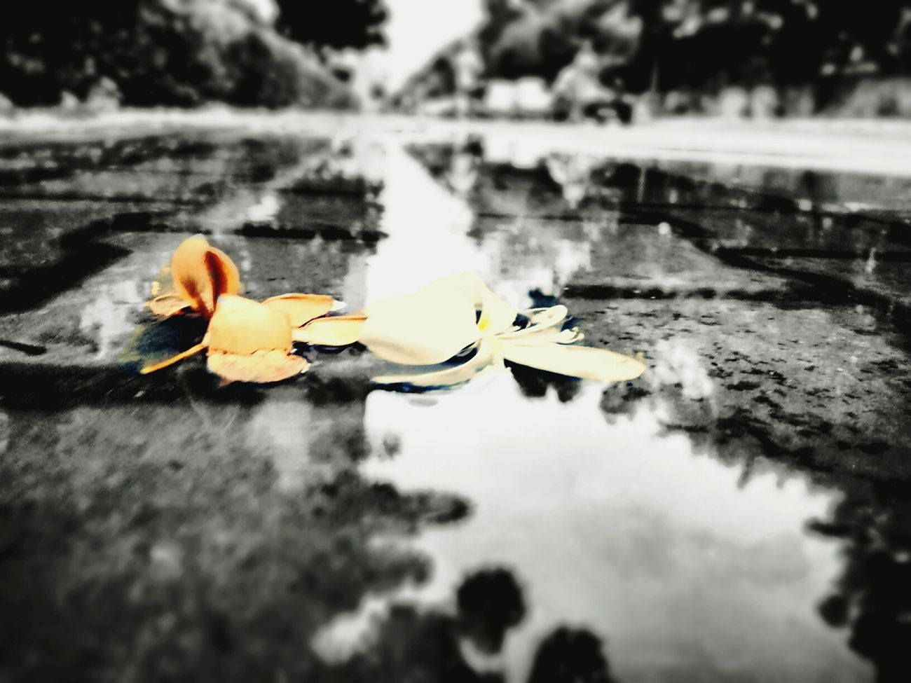 Pale Flowers in water Pale Pale Flowers Sadness After The Rain EyeEm Best Shots Badediting PhonePhotography
