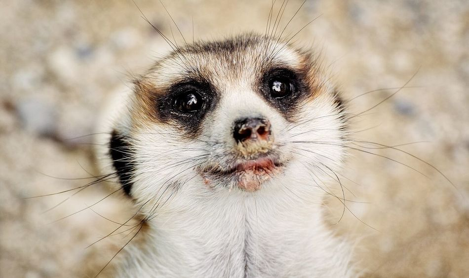 Beautiful stock photos of cute, Animal Themes, Animals In The Wild, Close-Up, Cute