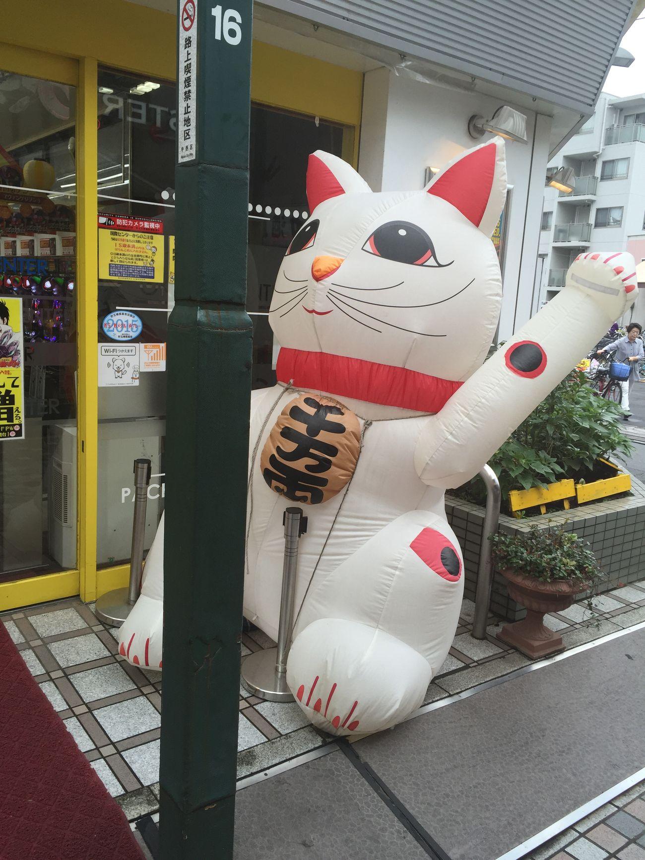 Snapshot Cat Lucky Pachinko