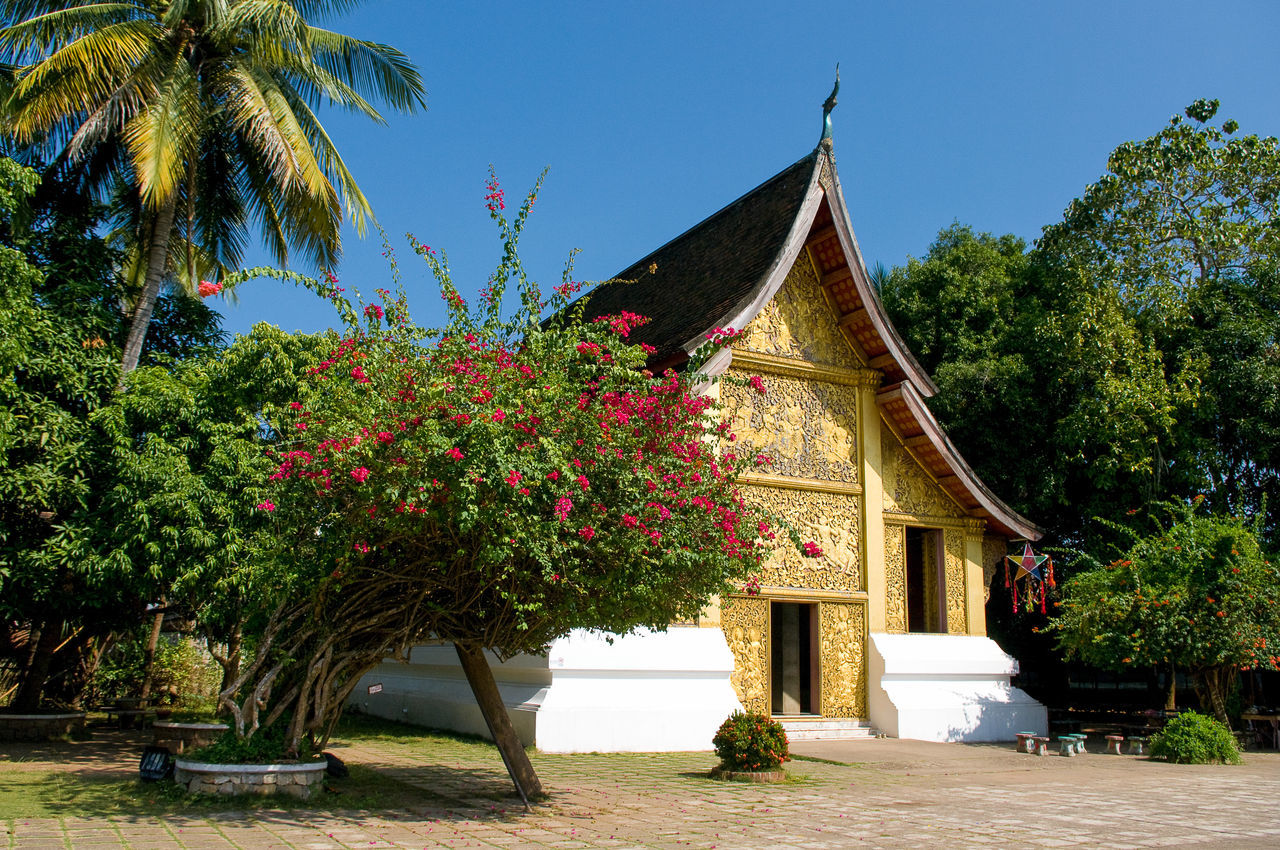 Wat Xieng Thong Temple Amidst Trees