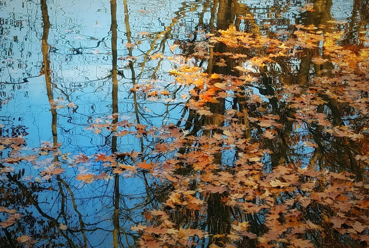 Nature No People Tree Day Outdoors Full Frame Backgrounds Beauty In Nature Water Abstract Fall Colors Autumn Colors Fine Art Photography Abstract Nature From My Point Of View Letgodhandleit Ripples In The Water Patterns In Nature Trees Leaves Floating Sky Reflection Reflection Blue Water Branches Rippled Water