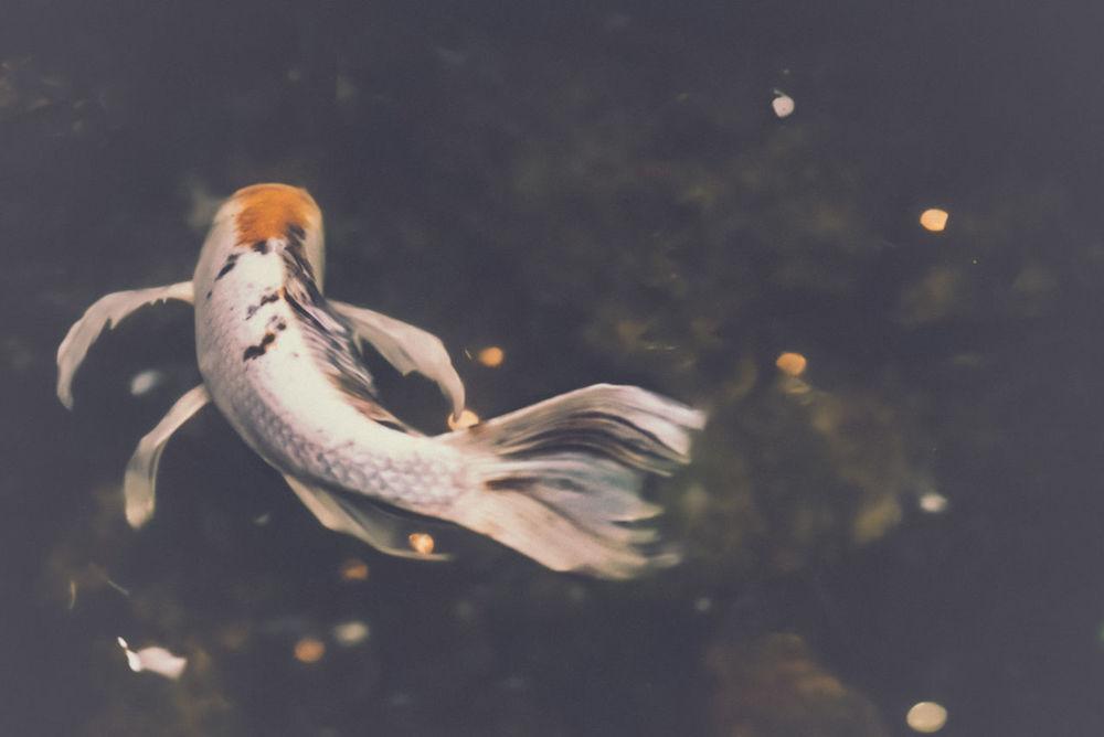 Coins Dramatic Edit Fish Koi Koi Fish What Lies Beneath