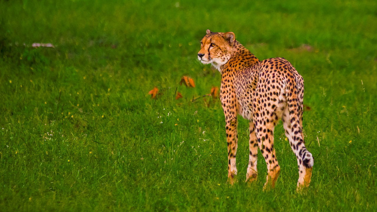 Beautiful stock photos of leopard, Animal Themes, Animals In The Wild, Botswana, Cat Family