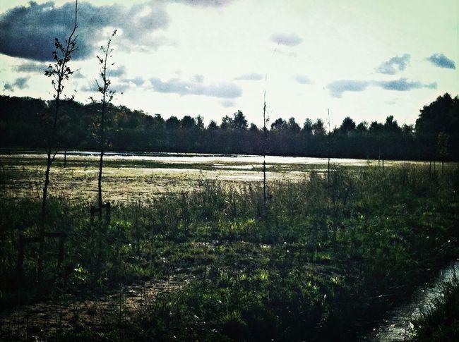 Het Renkums Beekdal Renkum Landscape Nature