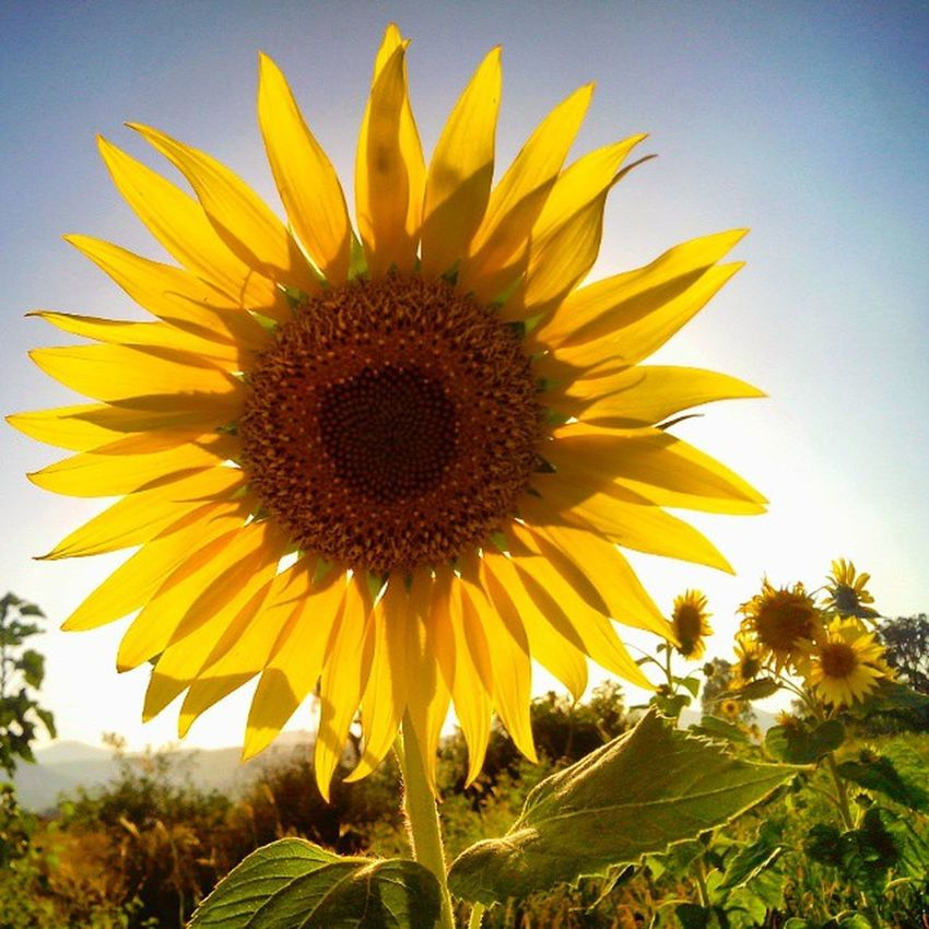 Bright 🔆 and Beautiful! 🌻 Afterlight Camera_incentives Superb_flowers