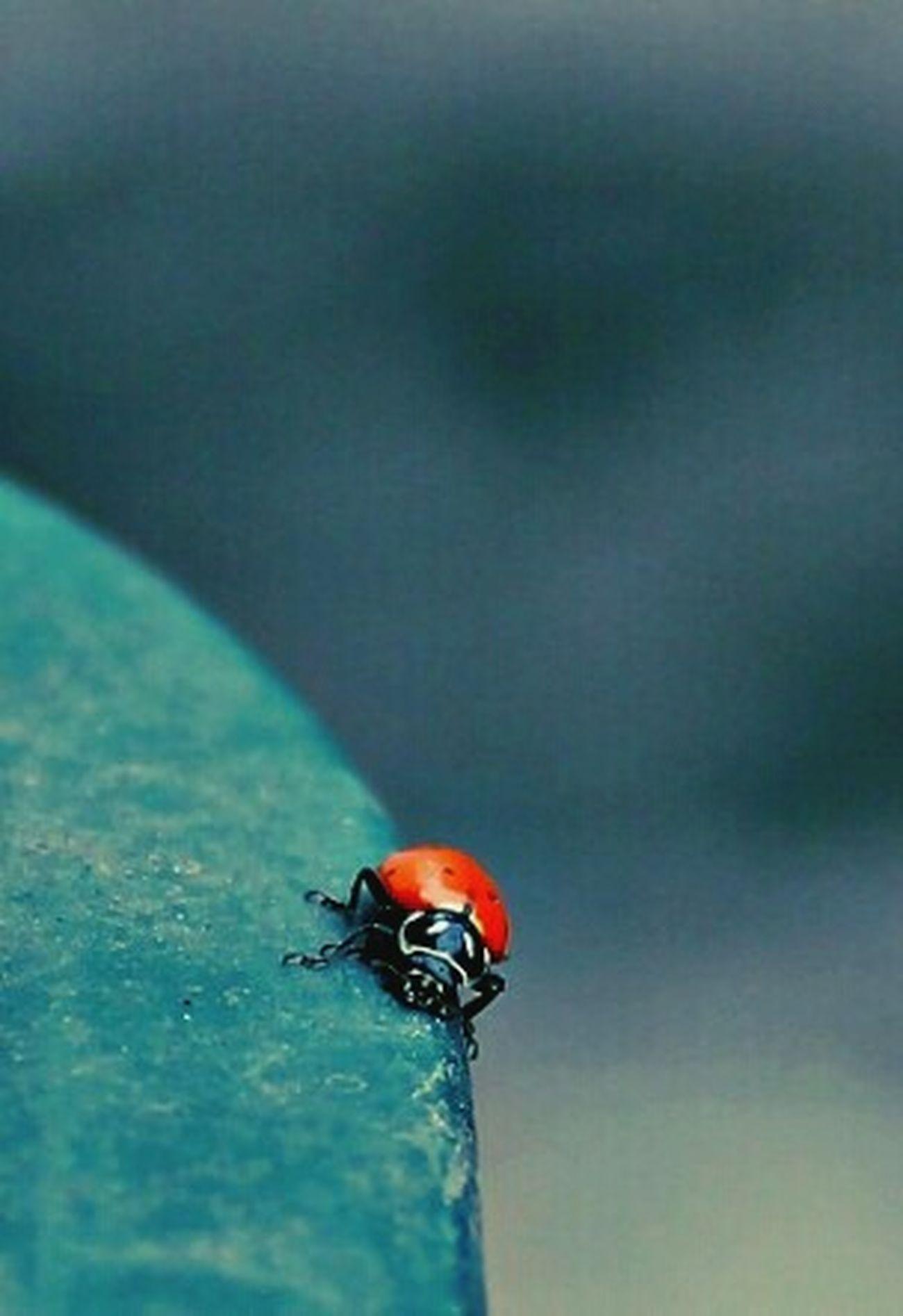 Ladybug. Ladybug Ladybug😊😊🐞🐞🐞 LadyBugLove Ladybug🐞 Ladybug Collection Ladybugs Photography Naturelovers Mariquitas Catarina Insects At My Garden Enjoying Life Hello World Ladybugs Ladybugs Everywhere Ladybuglovers Ladybugmacro Ladybugphoto