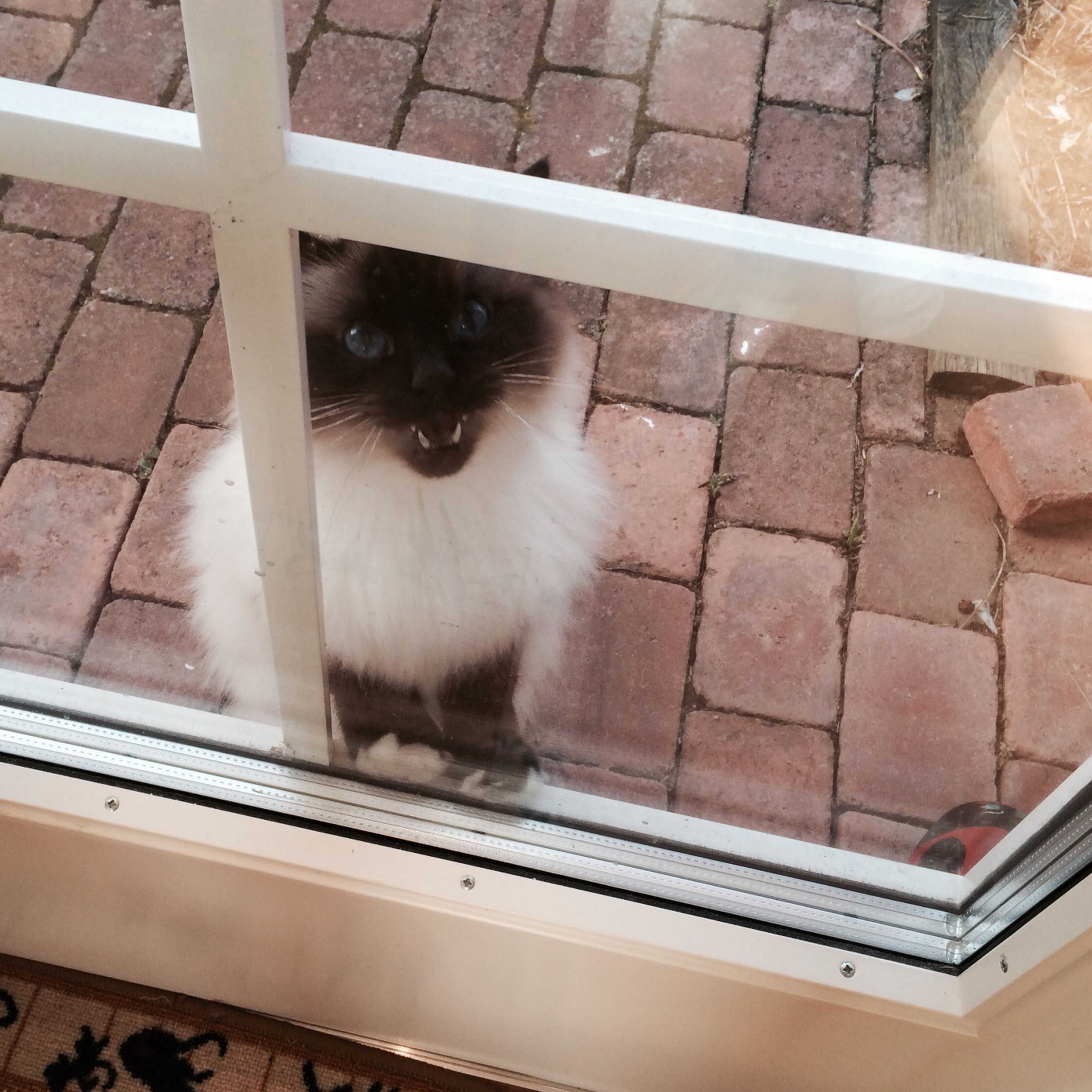 """""""Hey!! Let me in!!!"""" Window Peeking"""