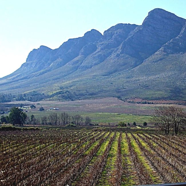 Vineyards in South Africa Around The World By Lufthansa