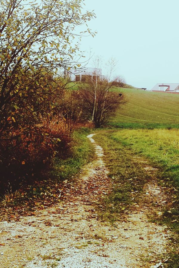My everyday path. Starting A Trip Fall Nature Path