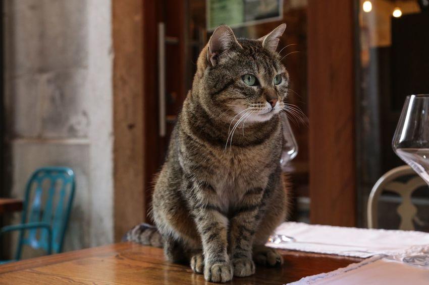 EyeEm Selects Domestic Cat Pets Feline Animal Domestic Animals Indoors  Table