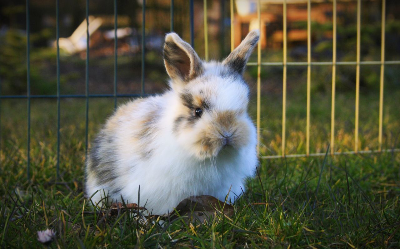 Beautiful stock photos of osterhasen,  Bunny,  Cage,  Close-Up,  Day