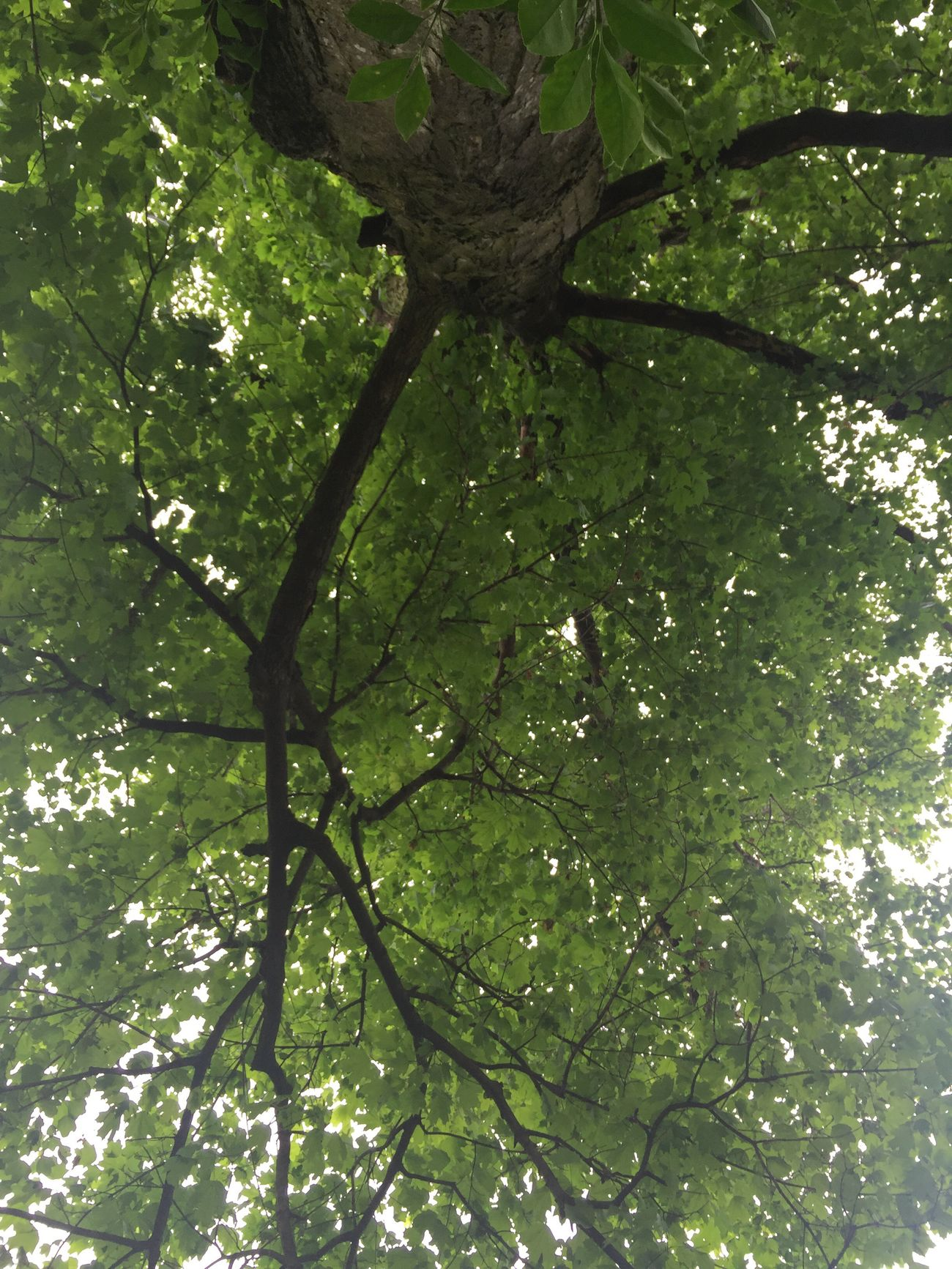 Nature Tree Perspective