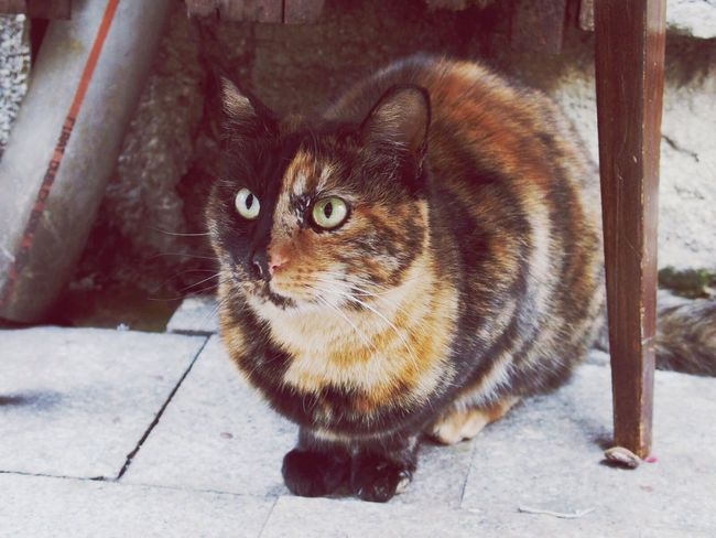 Cat Rare Beauty Pets Funny FUNNY ANIMALS