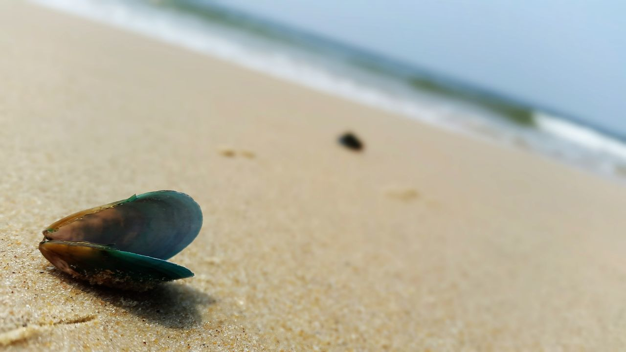 beach, sand, sea, one animal, shore, nature, animal themes, focus on foreground, outdoors, day, no people, close-up, hermit crab, sea life, beauty in nature, seashell, animals in the wild, water, sky