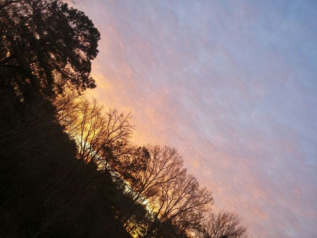 A peaceful moment HappySaturday Sunrise Trees And Sky Myview Decklife