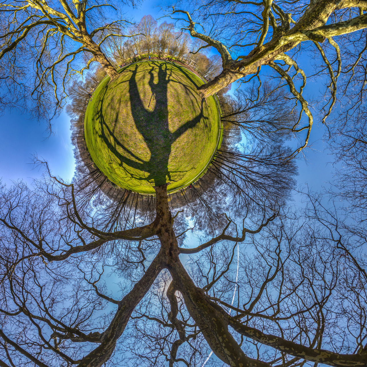 TREEOLOGY 360° Bare Tree Blue Sky Branch Branches Grass Green Color Growth HDR K-Town Kaiserslautern Kugelpanorama Light And Shadow Little Planet Nature Outdoors Panorama Park Sky Spherical Panorama Tiny Planet Tree Tree Trees Volkspark
