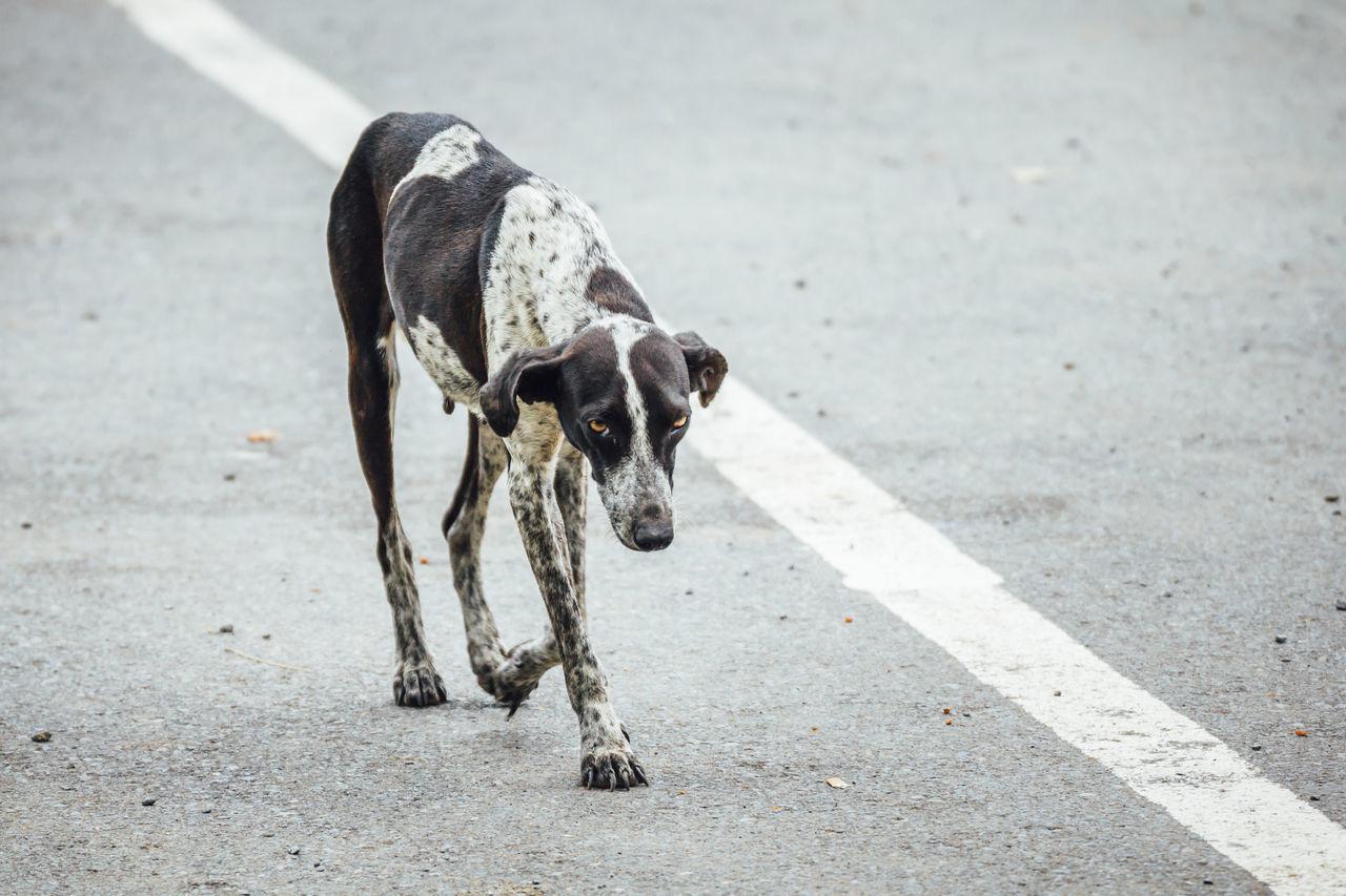 Abandoned Animal Themes Cuba Collection Dog Dog Life Domestic Animals Lonely Mammal One Animal Poor  Poverty Road Sad Street Dog